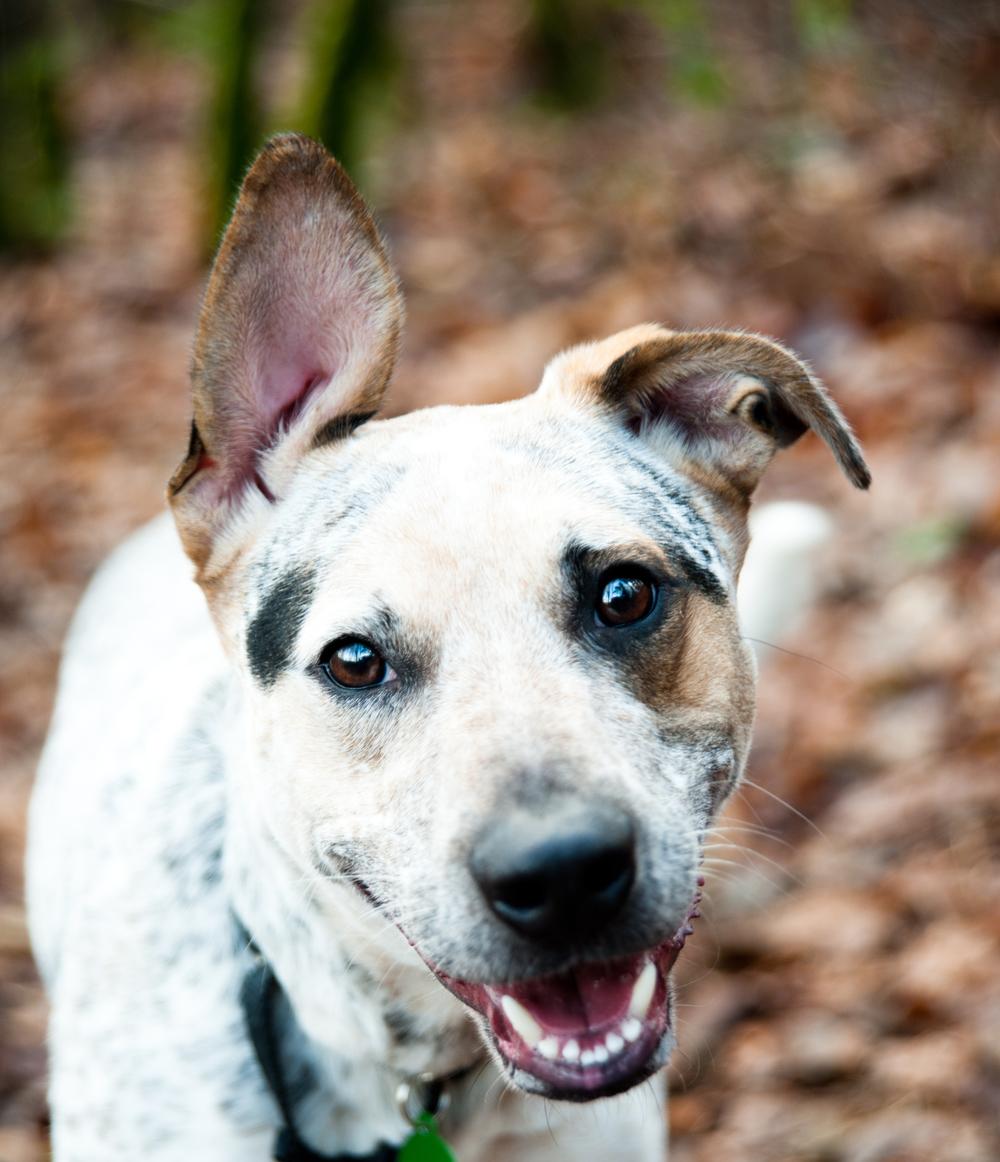 dog daycare smiling dog