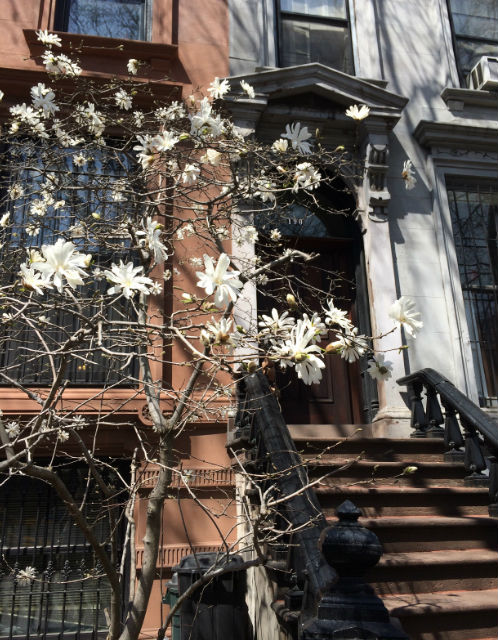 Brooklyn in bloom.