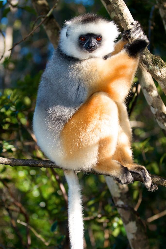 T_Steffens_Lemur 7.jpg