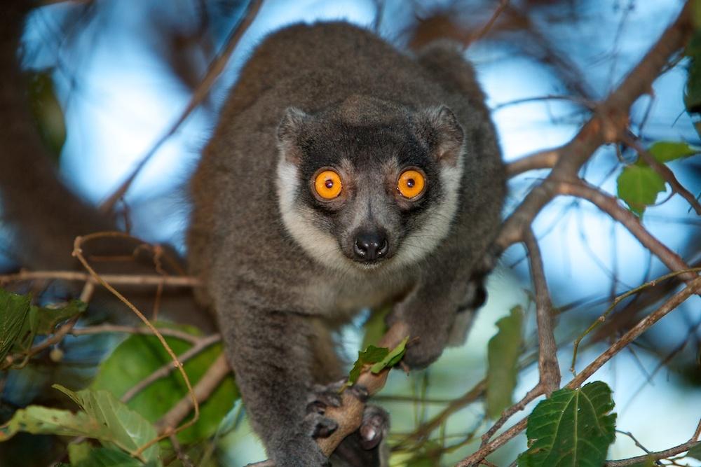 T_Steffens_Lemur 11.jpg