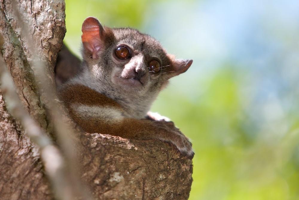 T_Steffens_Lemur 13.jpg