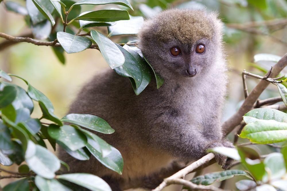 T_Steffens_Lemur 18.jpg
