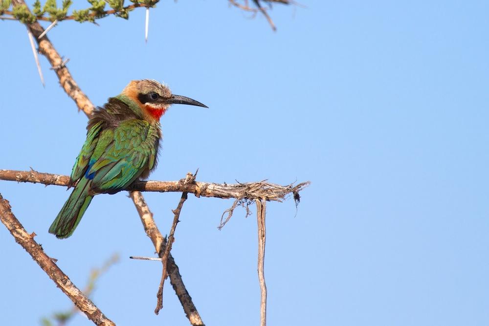 T_Steffens_Birds 2.jpg
