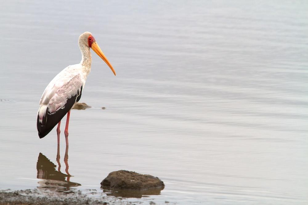 T_Steffens_Birds 5.jpg