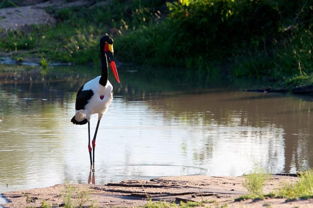 T_Steffens_Birds 7.jpg