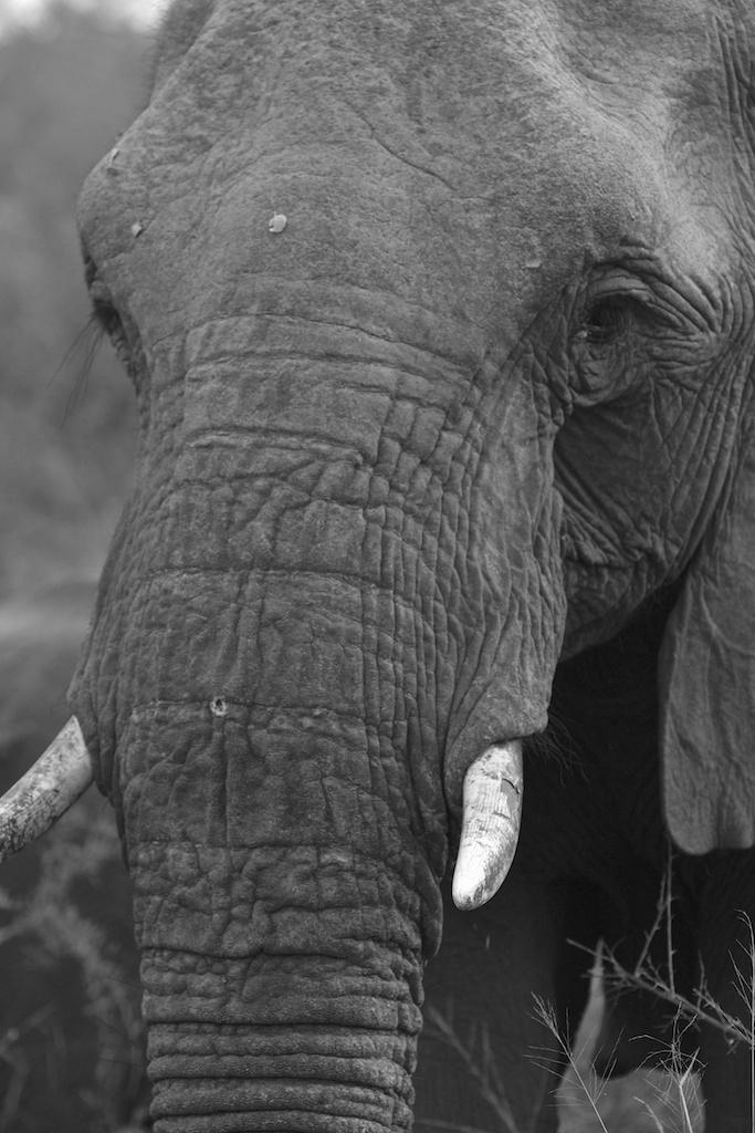T_Steffens_elephants 1.jpg