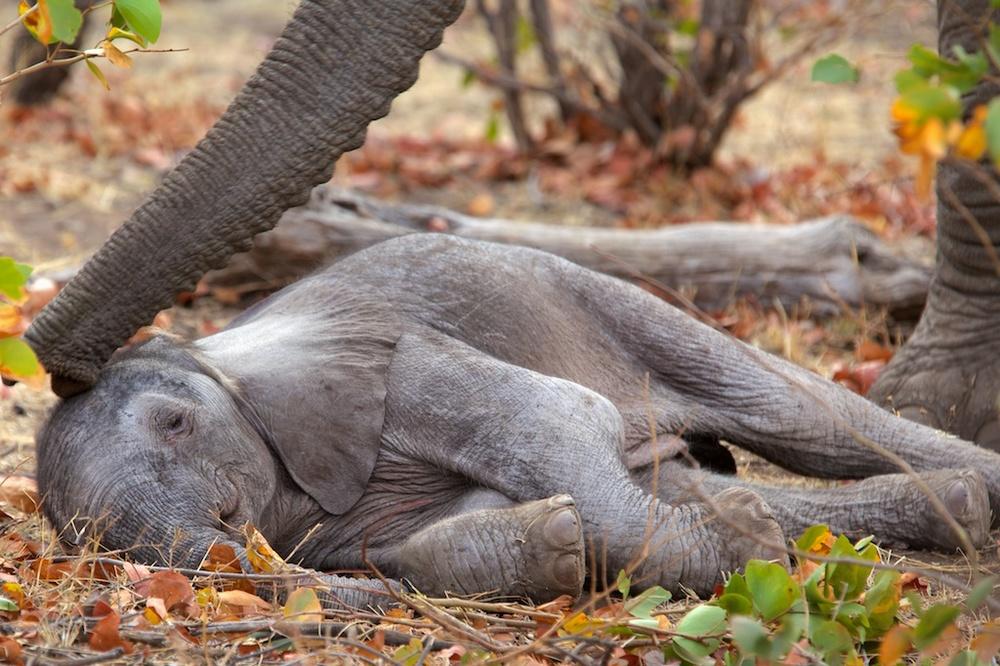 T_Steffens_elephants 3.jpg