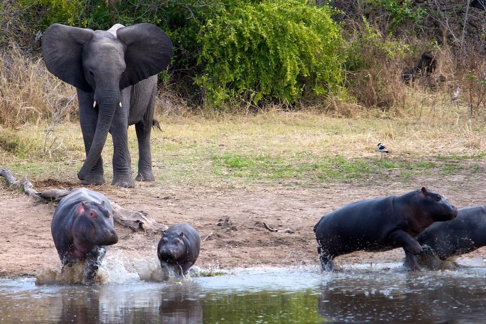 T_Steffens_elephants 7.jpg