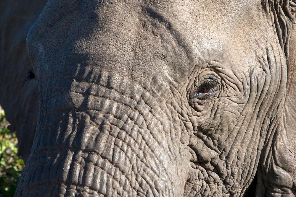 T_Steffens_elephants 6.jpg
