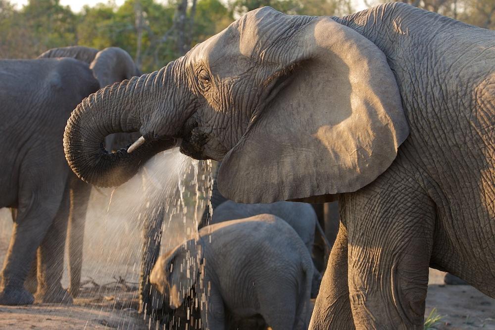T_Steffens_elephants 10.jpg