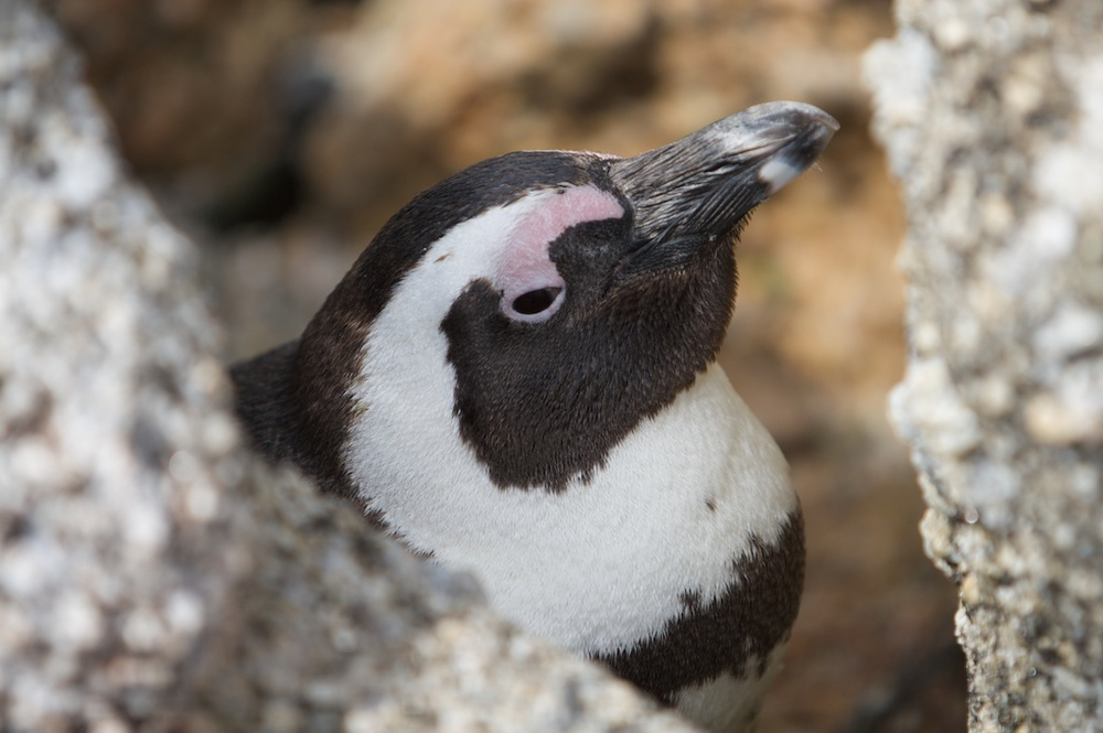 T_Steffens_Penguins 3.jpg