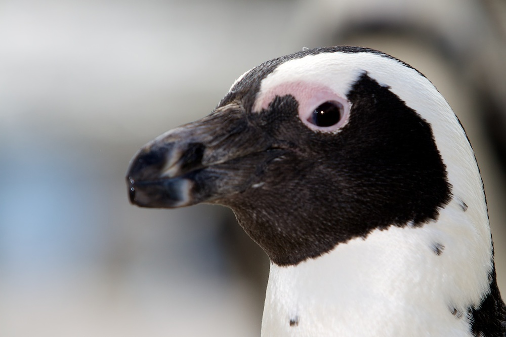 T_Steffens_Penguins 5.jpg