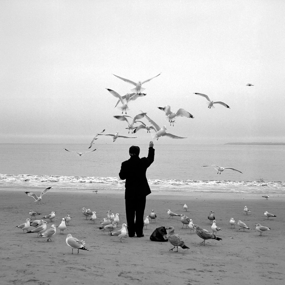 coney island bird man