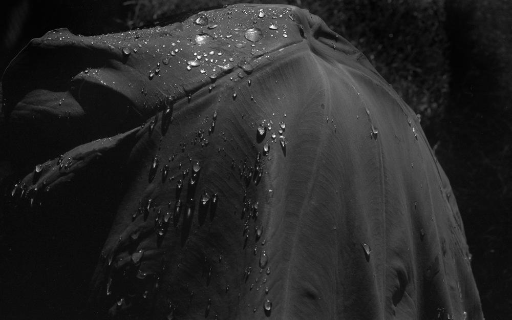 DROPS - FILM  BY AUDREY M. KUSKOWSKI