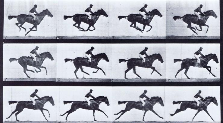 horse_0.jpg