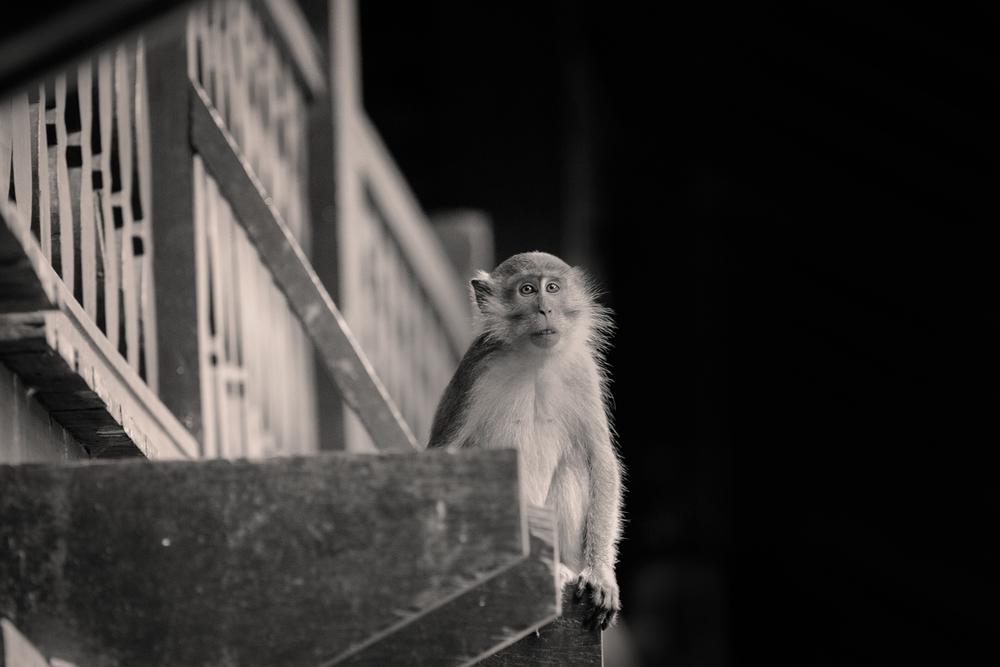 monkeymaybe.jpg