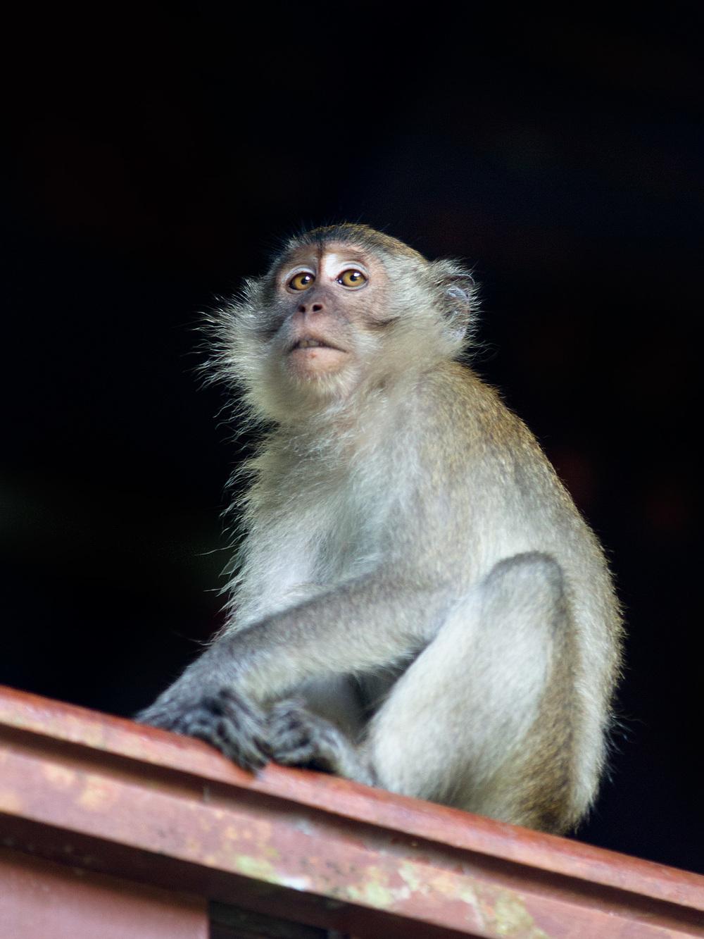 monkeymind.jpg