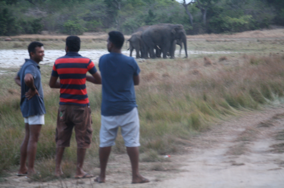site+elephants+on+road(1).png