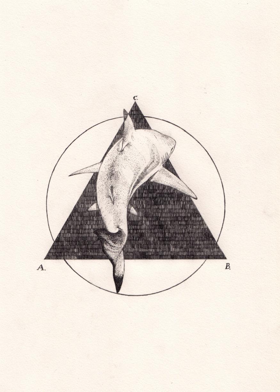SHARK ∆
