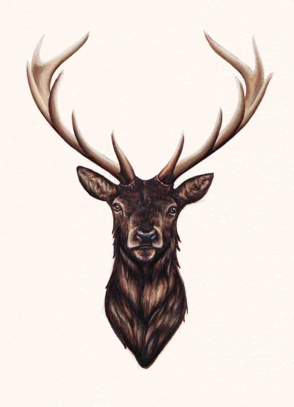 Stag Original Drawing — Peter Carrington Illustration