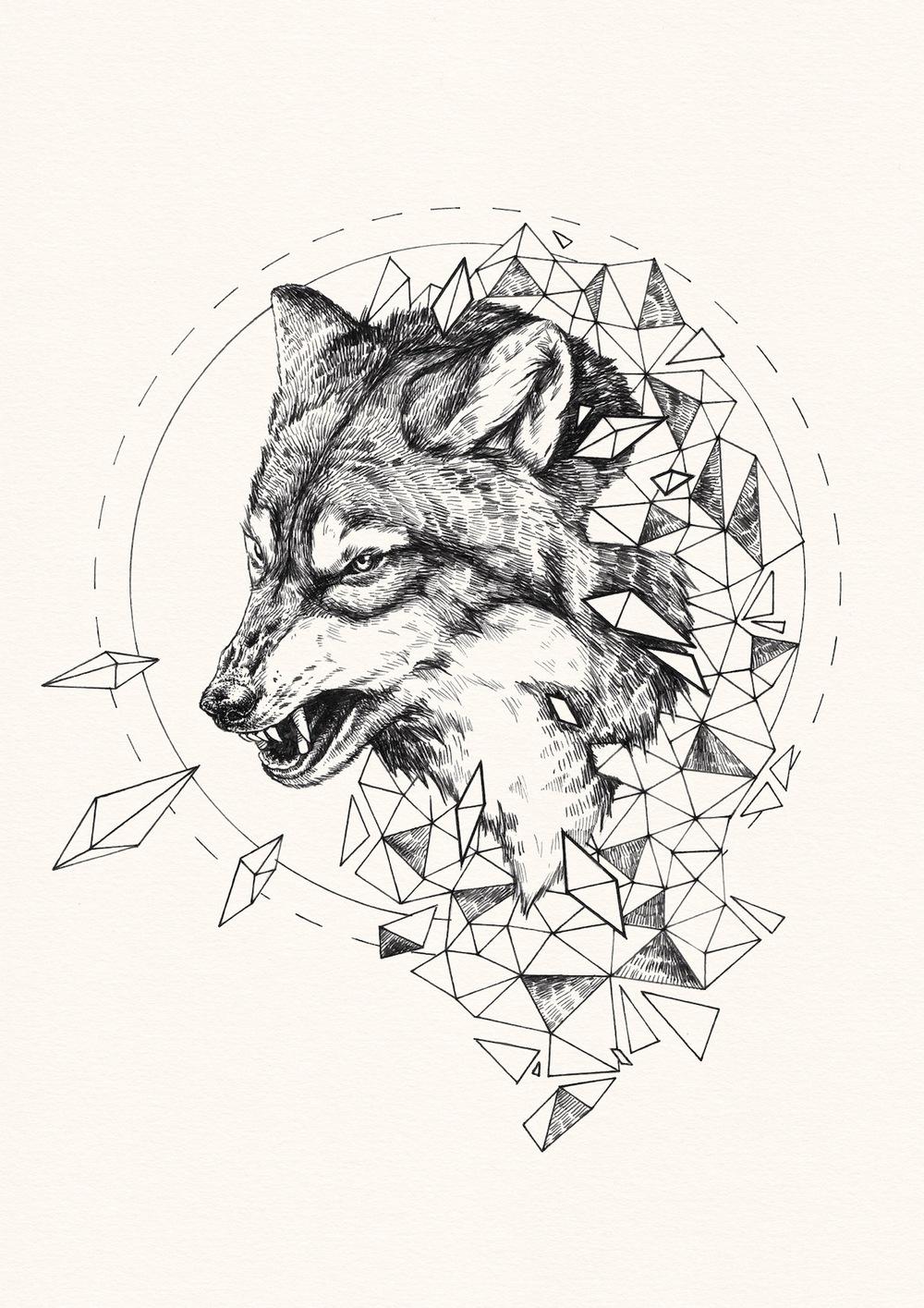 wolf shard  u2014 peter carrington illustration