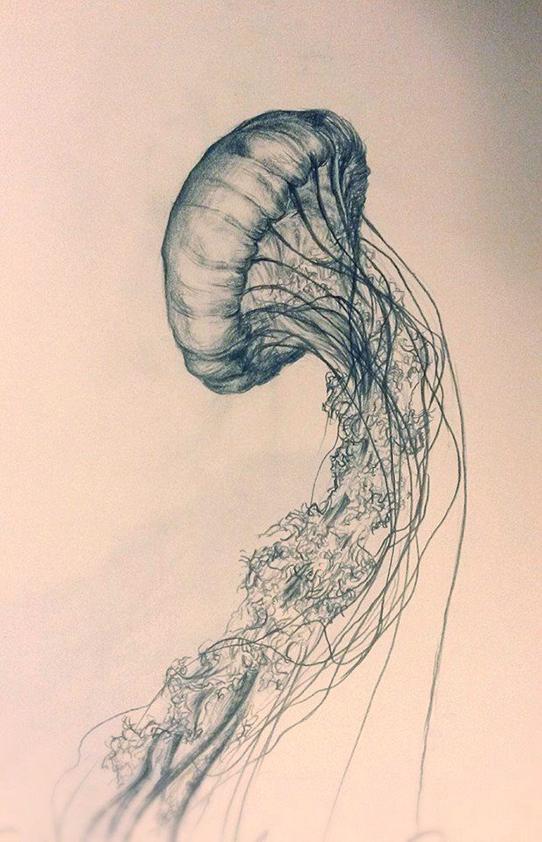 Jellyfish 2.jpg