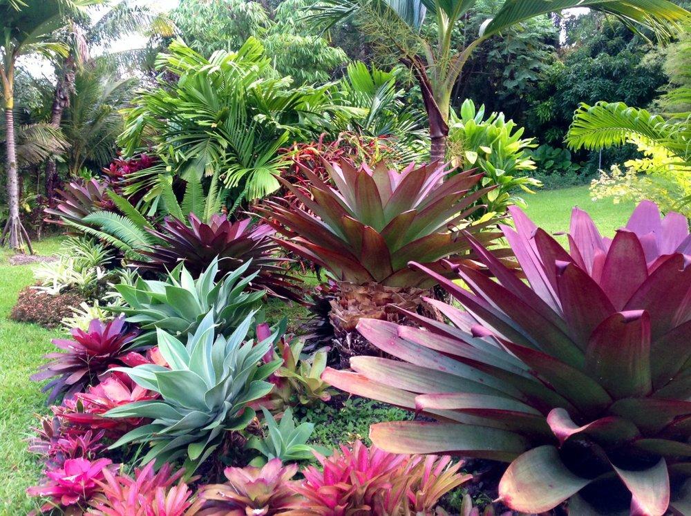 garden pic 6.jpg