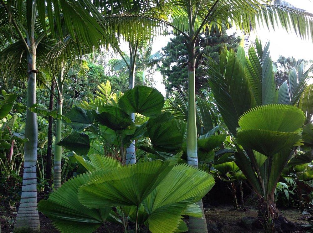 garden pic 4.jpg