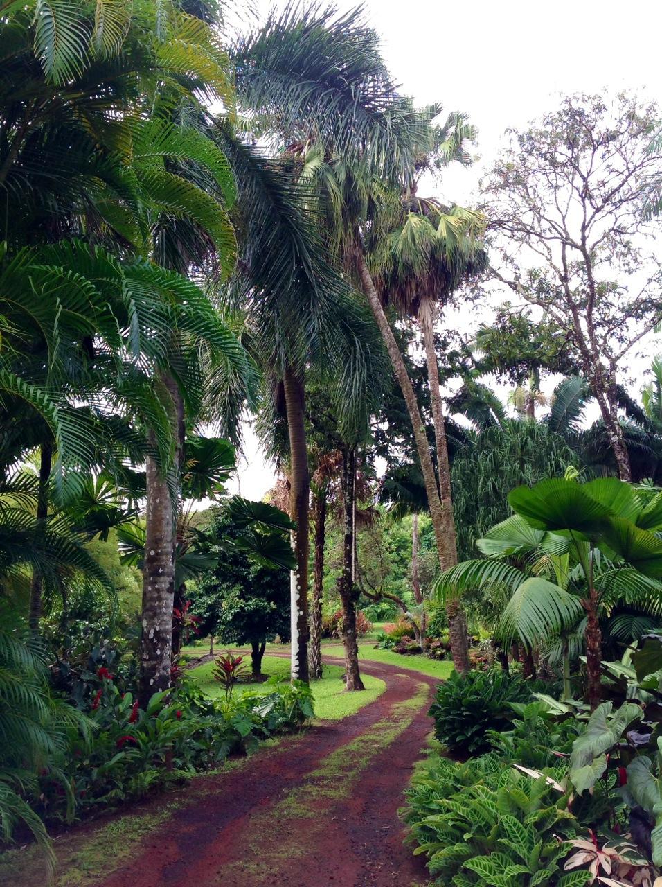 garden pic 7.jpg
