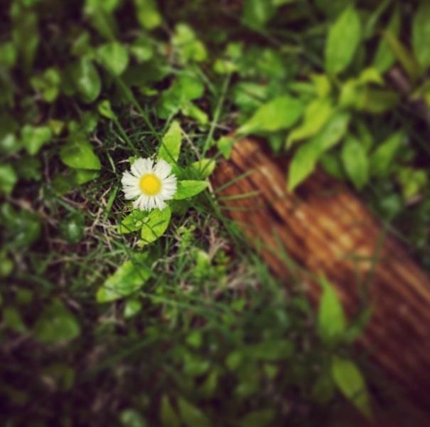 Even weeds can bloom (Cincinnati, May 2014)
