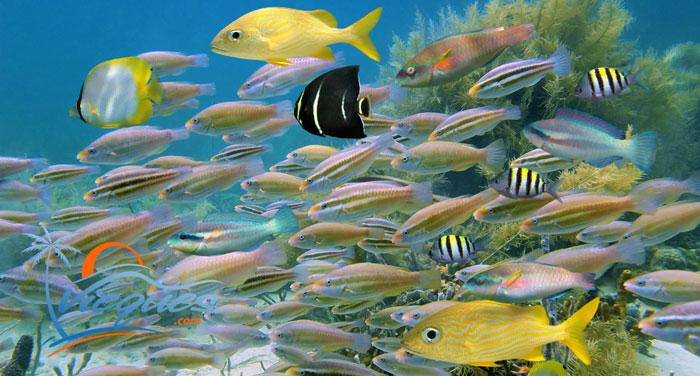 vieques-snorkeling1.jpg