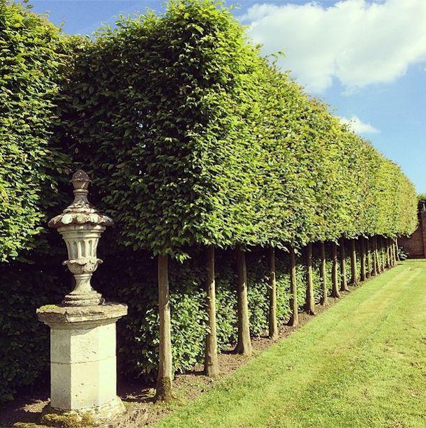hedges.jpg