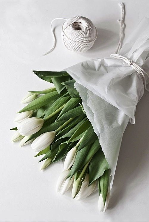 tuliops.jpg