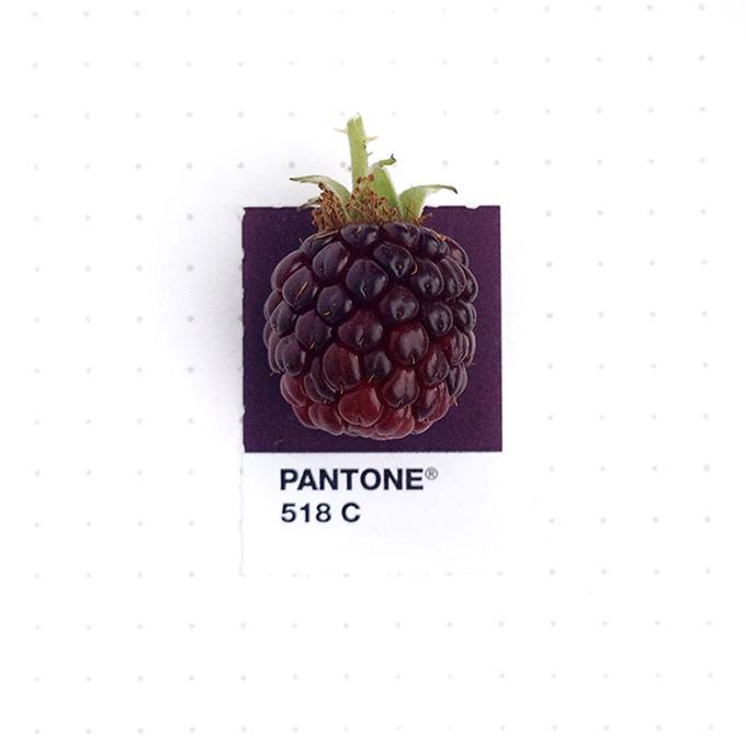 pantone-matching-system-everyday-objects-tiny-pms-project-inka-mathews-houston-texas-14.jpg