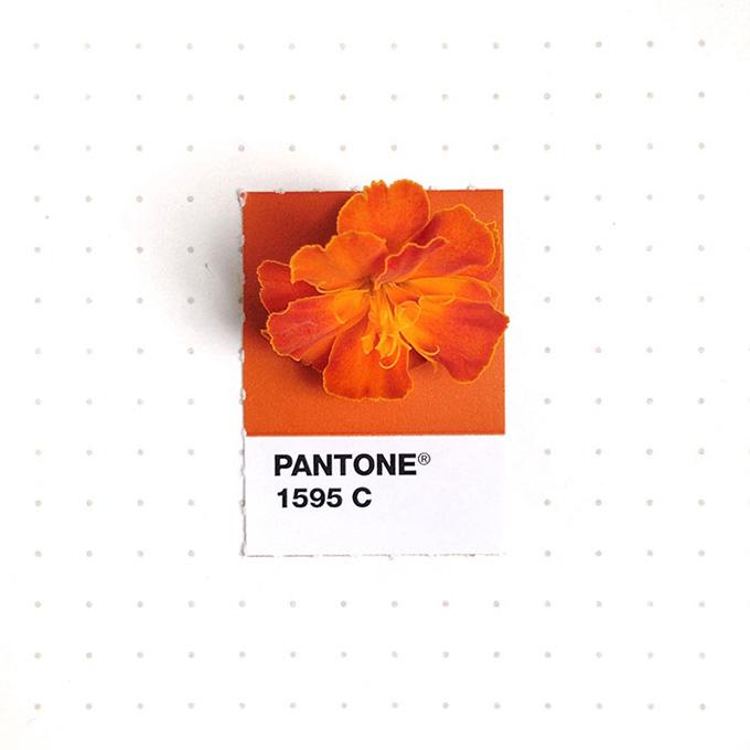 pantone-matching-system-everyday-objects-tiny-pms-project-inka-mathews-houston-texas-19.jpg