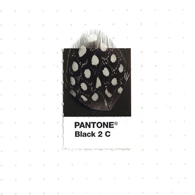 pantone-matching-system-everyday-objects-tiny-pms-project-inka-mathews-houston-texas-20.jpg