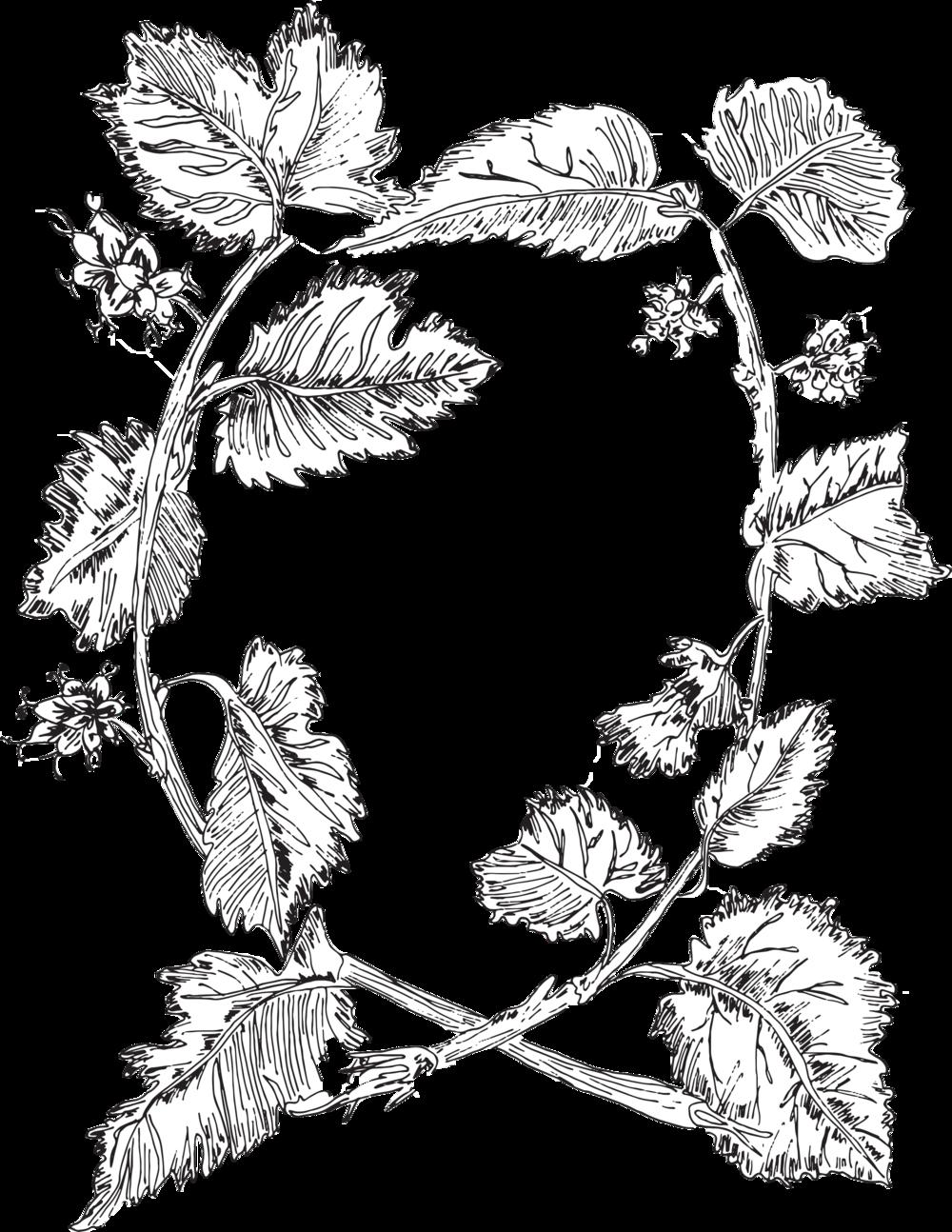 Twigss Floral Studio - Danville