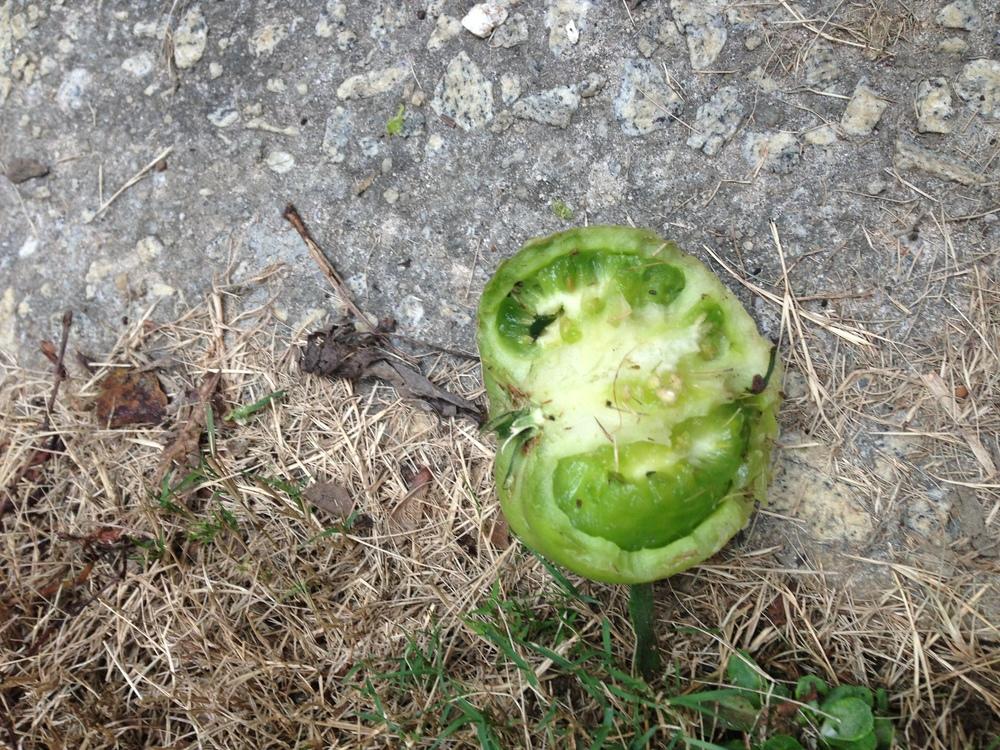 half eaten tomato down the driveway