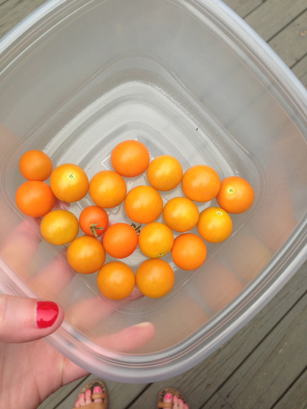 yay sungold tomatoes bowl