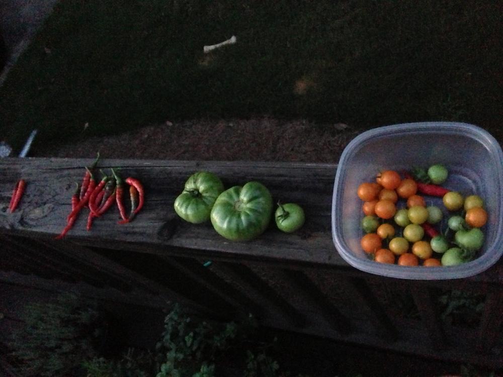 a decent harvest