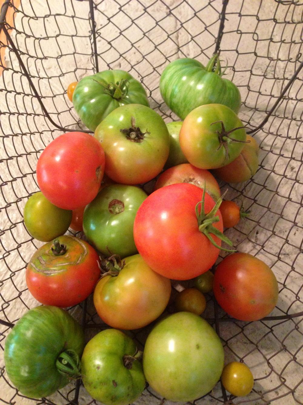 yay tomatoes!