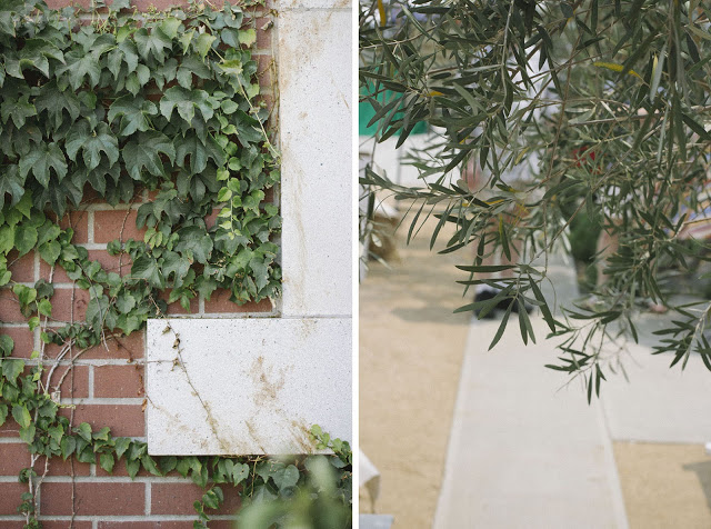 vine+wall+copy+copy.jpg