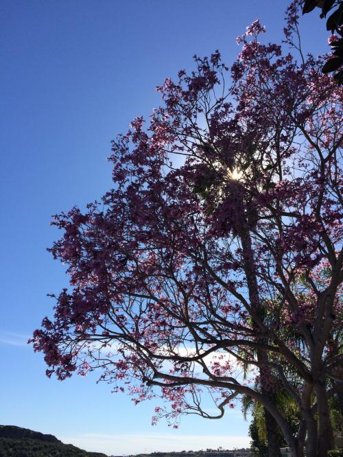 spider_tree