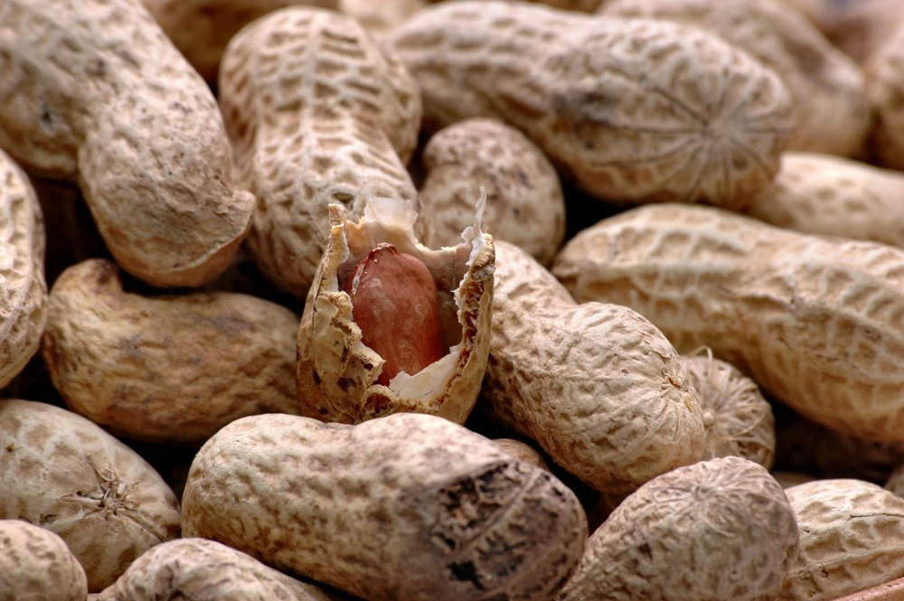Peanuts are one of the most versatile foods - use them to punch up an ice cream sundae, as a go-to snack at a ballgame, or to make a Chinese rice dish. Peanuts sustained me during long summers of archaeological site excavation in Labrador, Canada.  I'd sit on the top of a hill with the cool Arctic breeze in my face, peanut butter and jelly sandwich in hand, and watch the whales and seals frolic. Peanuts are a rich source of energy (manganese) and protein. They are high in antioxidants, a heart-healthy fat, and help decrease hunger. So why wouldn't I put them in Speedie B's?