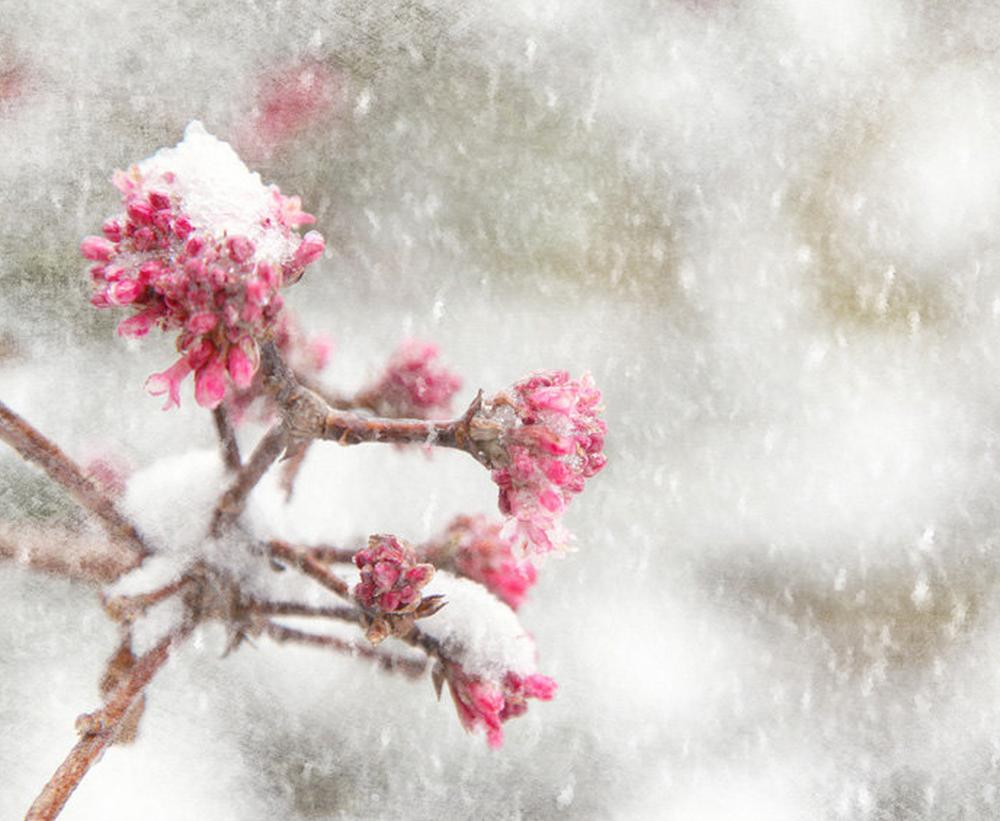 Pink Winter Scene byLisaBonowiczPhotos