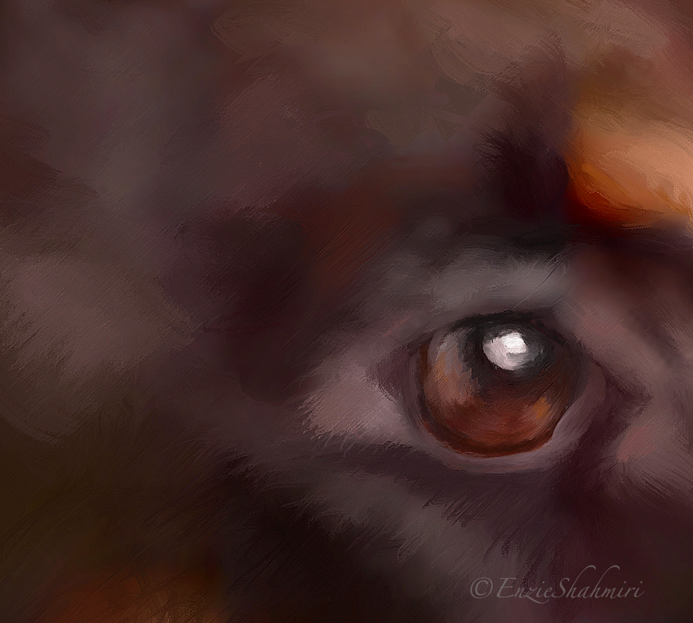 Eye Detail for Doberman Portrait