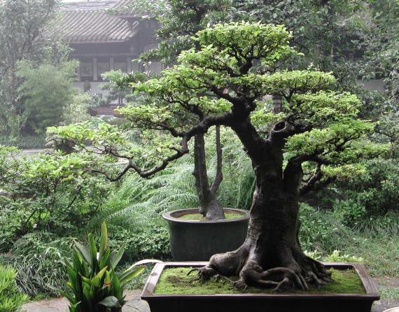Bonsai Tree byKittahroses