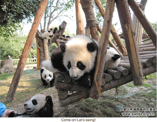 pandas-on-playground.png