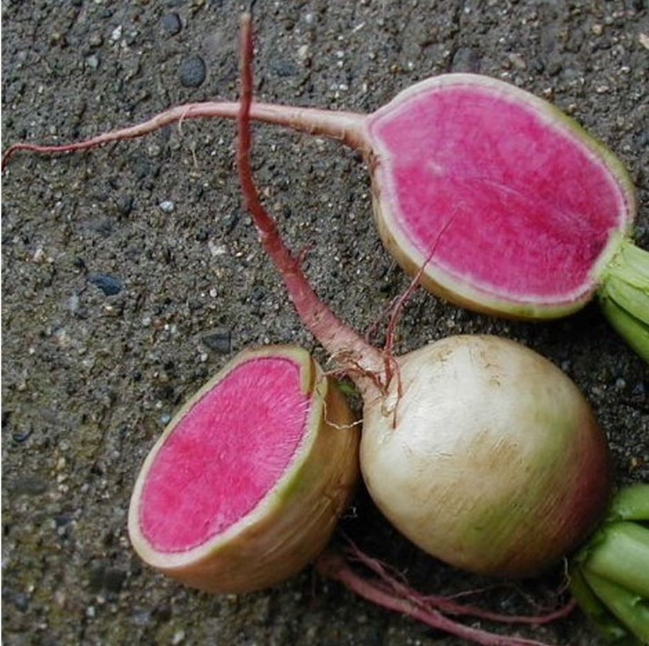 Organic Watermelon Radish Seeds by Cubits