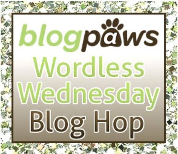 blog-paws-blog-hop